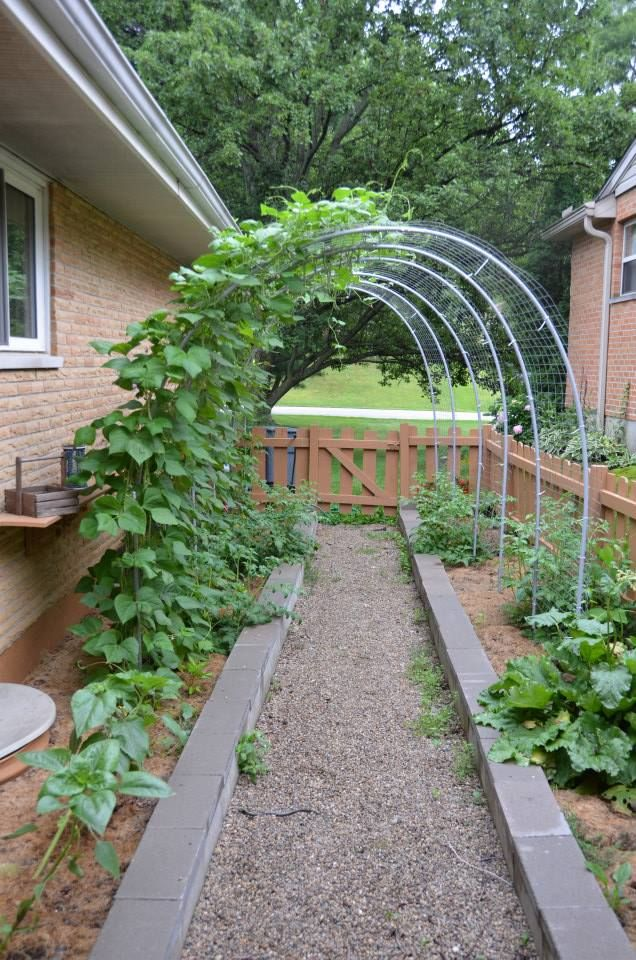 Inexpensive Garden Arbors! Made with Electrical Conduit, Rebar posts, Construction Fencing and Zip Ties. Three Arbors under $60 bucks!
