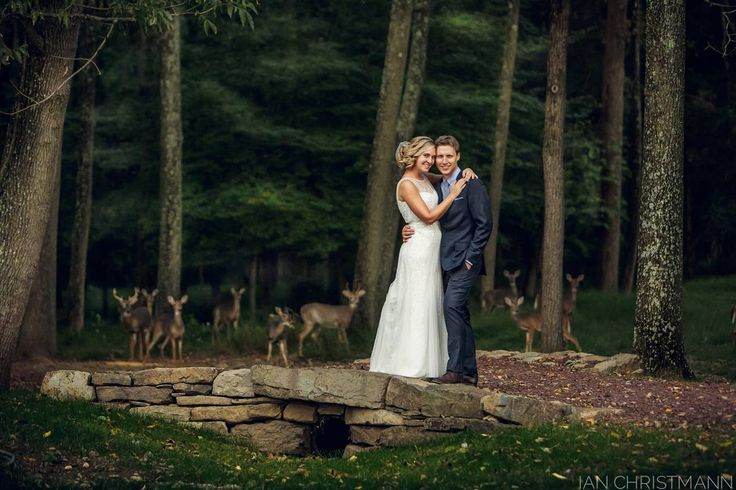 You never know what happens on a wedding day! A wonderful photo by Ian Christmann. #weddingphoto #wedding #hochzeit #Rehe   About the photographer: http://catalystphotography.com/blog/deerly-beloved/