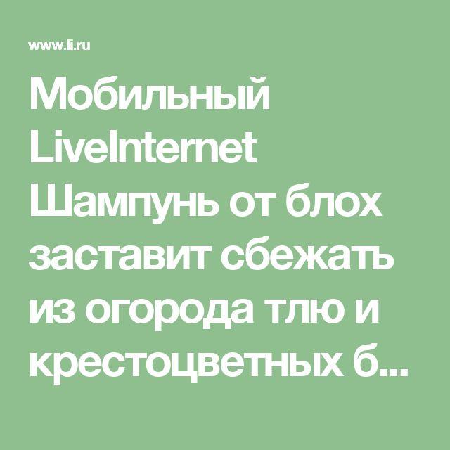 Мобильный LiveInternet Шампунь от блох заставит сбежать из огорода тлю и крестоцветных блошек   Belenaya - Дневник Belenaya  