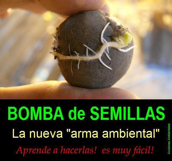 BOMBAS DE SEMILLAS!! Es muy fácil.... Solo hace falta tierra, arcilla, agua y las semillas (Usar de PLANTAS AUTÓCTONAS). 1) Se prepara el barro mezclando 10 partes de tierra y 1 de arcilla (debe ser maleable); 2) Agregar las semillas; 3) Amasar para que las semillas se mezclen; 4) Armar las bolitas; 5) Dejar que se sequen a la sombra SIN SOL. Una vez arrojadas, la humedad y las lluvias harán su trabajo. Normalmente en menos de un mes ya se ven las primeras germinaciones.