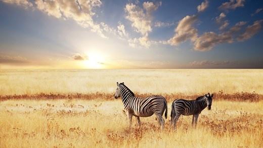Jorden rundt reise: Stephanies Smashing Route #Explore #Life #safari #beautiful #sebra
