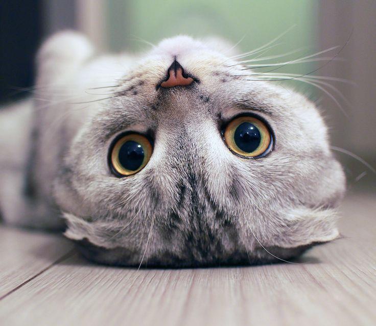 🐱 CAT CONTENT🐱  Die 10 schönsten Katzen-Cafés der Welt! MIAU! Was braucht man mehr als ein leckeres Stück Kuchen, guten Kaffe und eine kuschelige Katze?