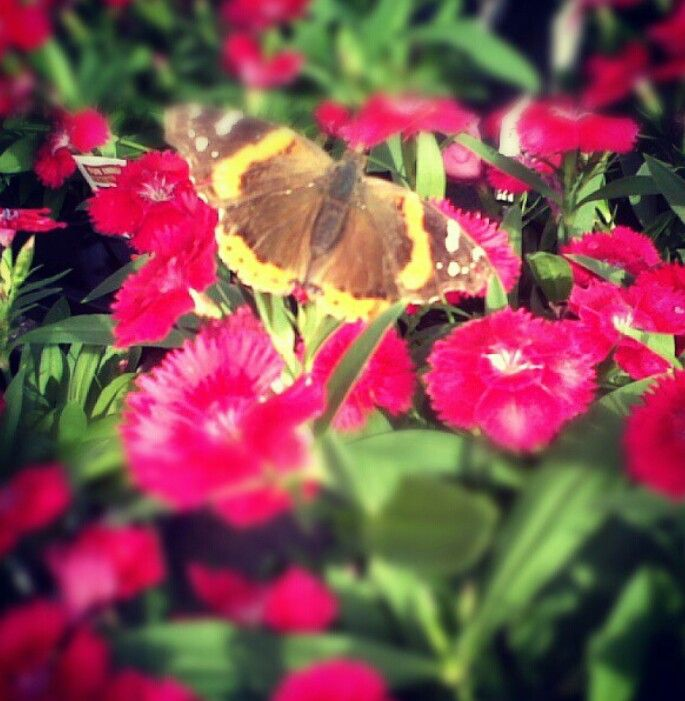 Idk what kind these are but the butterfly sure likes it! :)