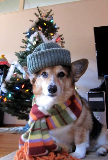 """It's not even December and we're already seeing a swarm of Christmas-y Corgi pics."" Let the holidays begin! :D https://www.youtube.com/watch?v=7r5Sbwx39LY"