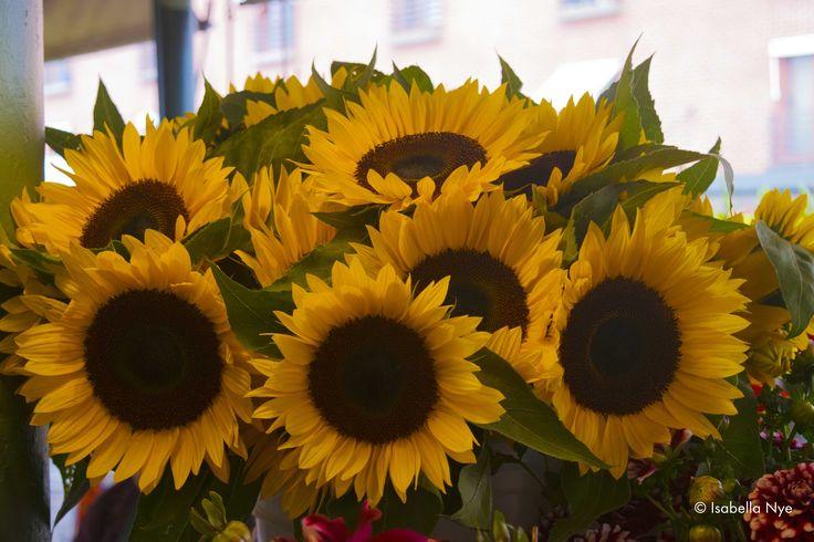 #flowers #yellow #colour #market #pikeplacemarket #seattle #washington #wa #america #sunflower #contrast #photography #nikon #dslr #beautiful #nature