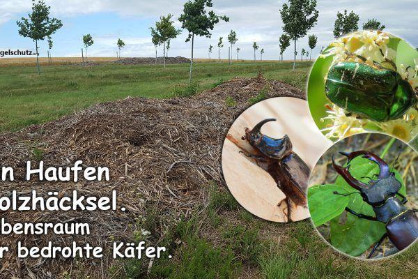 Ein Drahtkomposter Und Viel Totholz Tolles Naturprojekt Fur Kleinste Garten Liga Vogelschutz In 2020 Lebensraum Kompost Kleiner Garten
