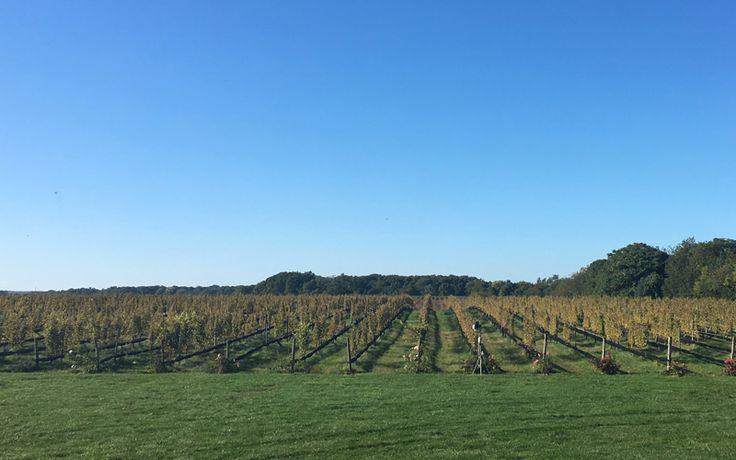 Hand Vs. Machine Harvest: Blind Taste Tested #Wine #Wineeducation