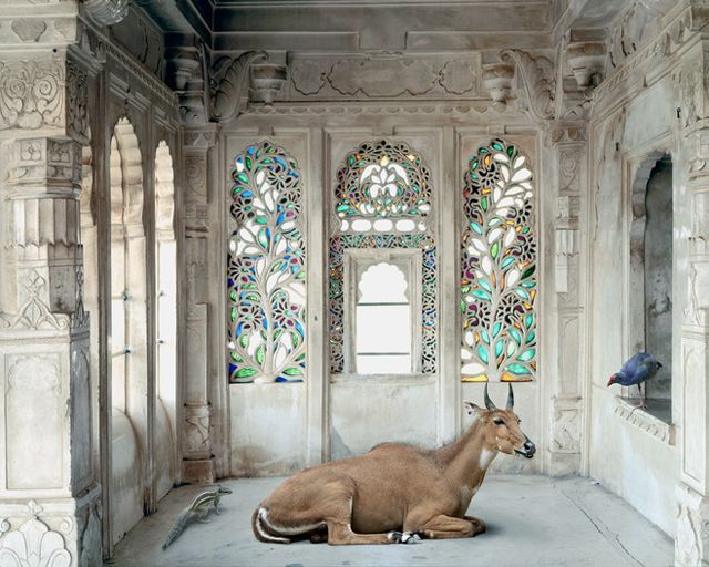 Karen Knorr photography from India