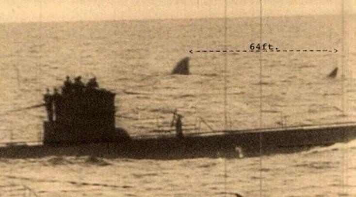 Il megalodonte è una specie di squalo andata estinta 1,8 milioni di anni fa. Ma un documentario di Discovery Channel l'ha fatto rivivere ed apparire accanto a un'U-Boat tedesca degli anni '40. Non sono servite molte verifiche per capire che la foto color seppia, in cui lo squalo appare lungo 19 metri da pinna a coda (il doppio rispetto ai tempi preistorici), è un falso.