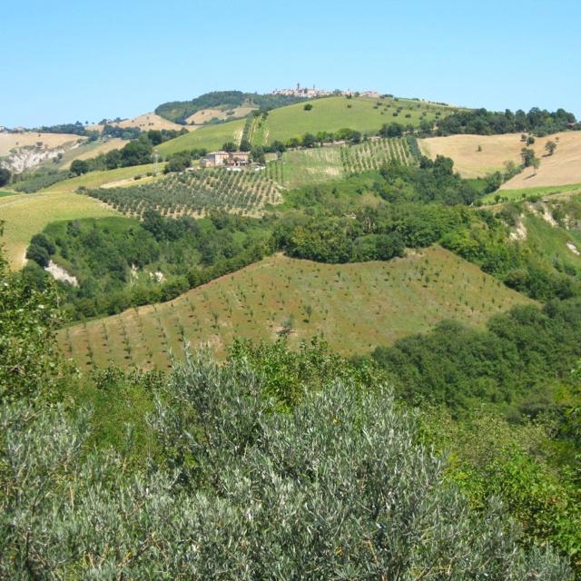 Monterubbiano, Marche, Italy Le Marche hills near Monterubbiano