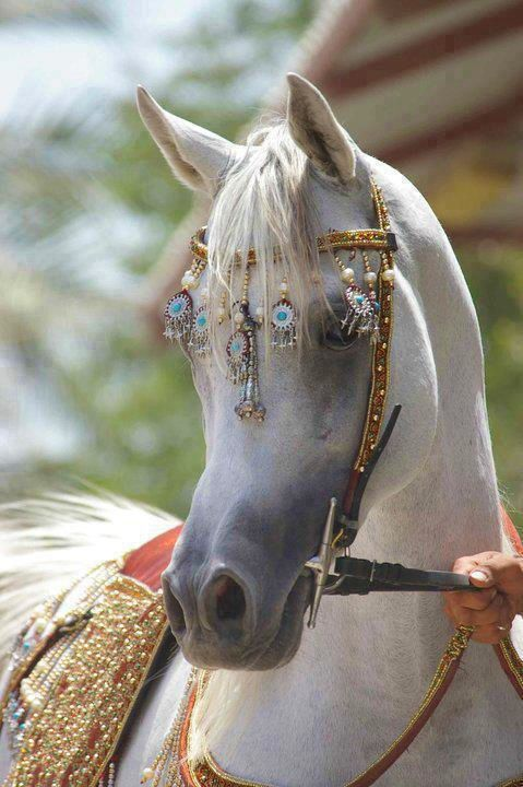 Arabian.....NO link to follow. Pinned for the halter (not sure I'd want all those bobbles banging into my horses eyes...) however, very cool design for model horse tack!