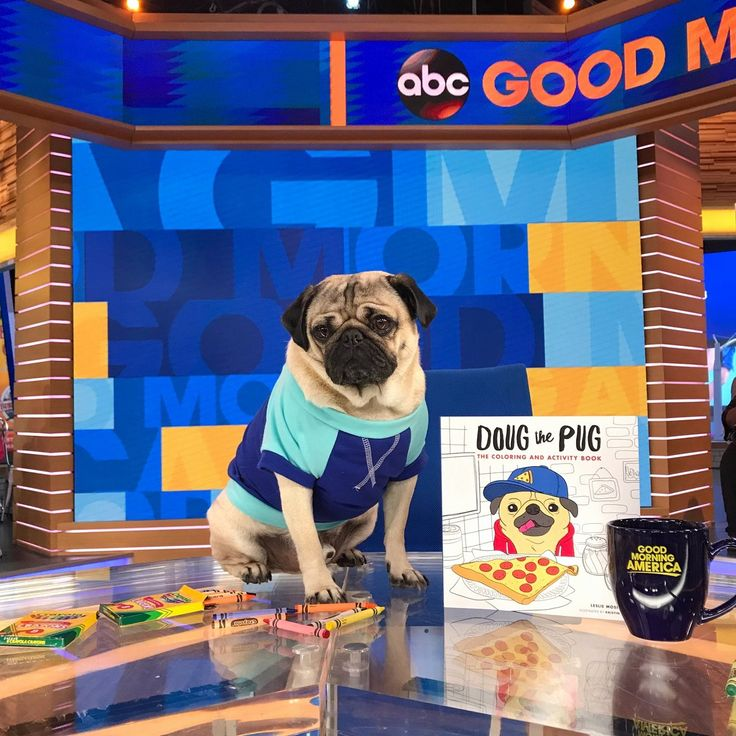 15++ Doug the pug coloring book information
