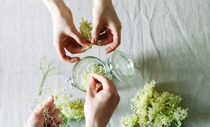 Zuckerfreier Blumentrunk: Holunderblütensirup zum Selbermachen