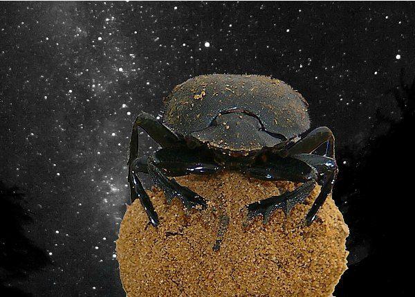 Lições do Astrônomo escaravelho, o rola-bosta, sobre a Via Láctea on Dom7 http://www.dom7.com.br