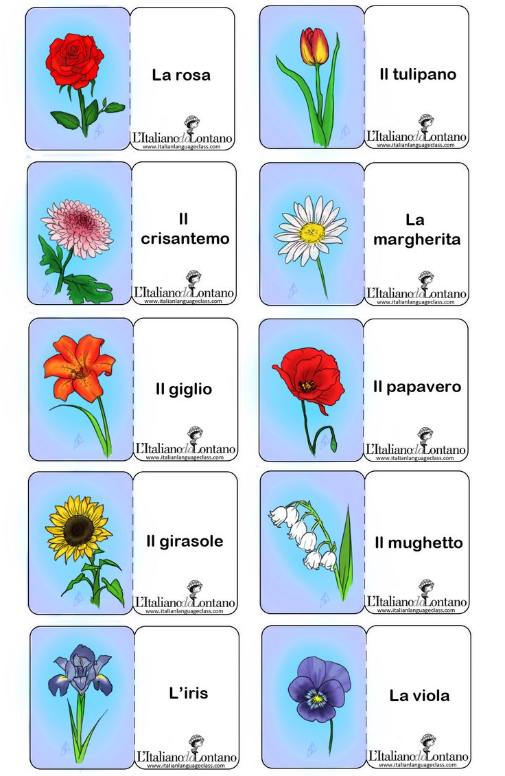 Per imparare i nomi dei fiori in italiano. #flashcards #learnitalian