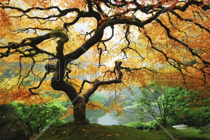 Autumn Maple - Bilder auf Leinwand - Photowall