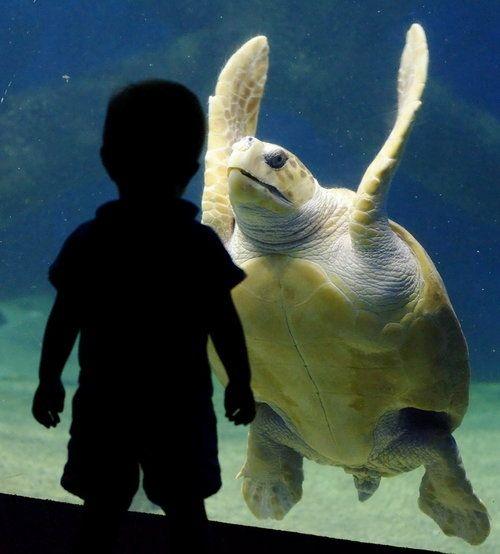 Eye to Eye: Wild Animal, Animals, Big Turtle, Seaturtles, Funny, Sea Turtles, Photography, Kid