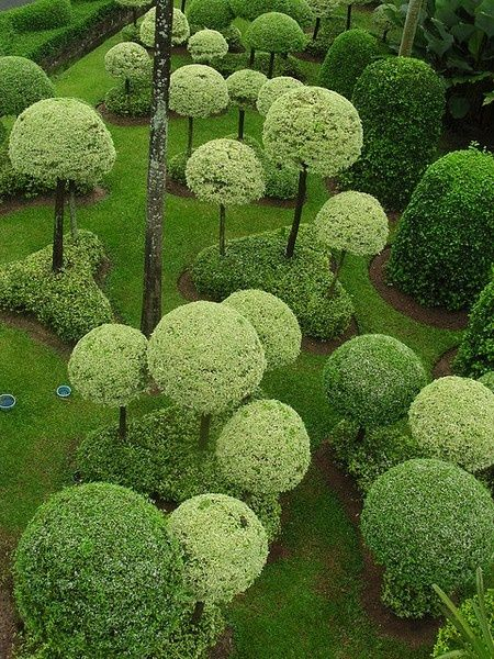 Topiary in lighter green shades