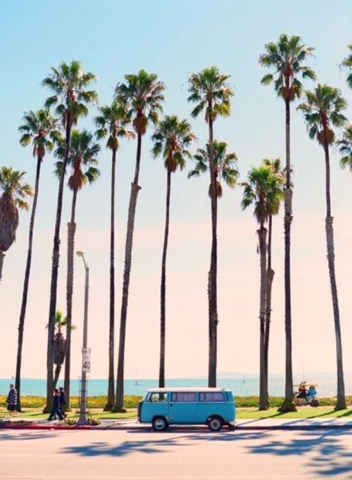 Spring is almost here... #california #palmtrees #beach