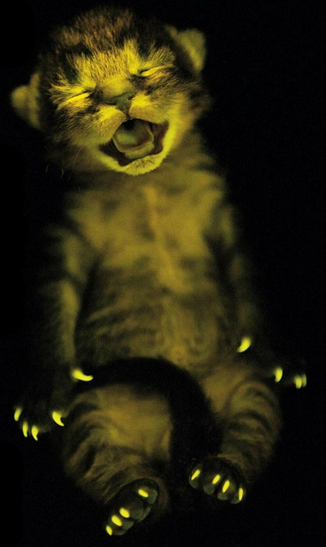 glow in the dark kitty | Cat Crazy | Pinterest