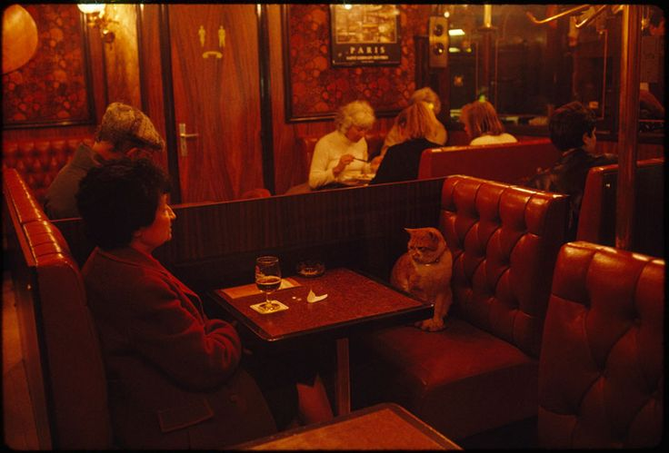 """A KITTY WITH STYLE! A Regular At Le Louis Ix In Paris, """"Caramel"""" Keeps A Client Company, May 1988"""