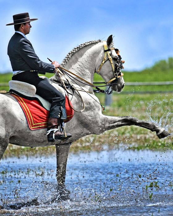 Andalusian stallion and trainer - Mario Contreras.  By Fire & Earth photography.