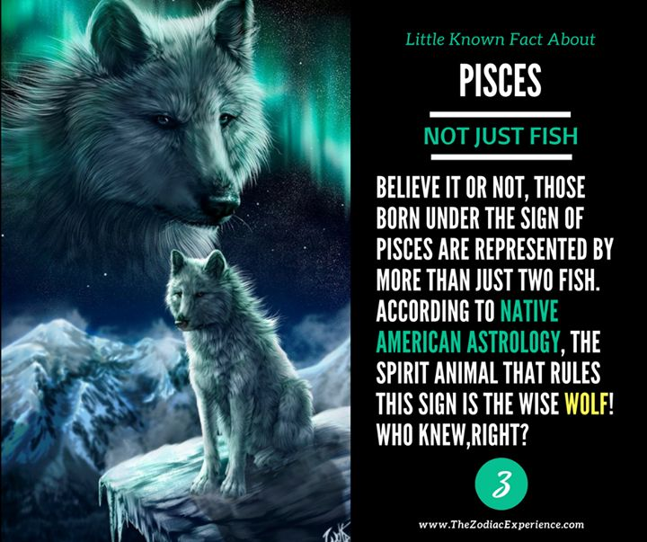 Of course! Only a wolf can be the one to lead crowds and only a wolf alone can fight anything. It never runs away... NEVER. VC