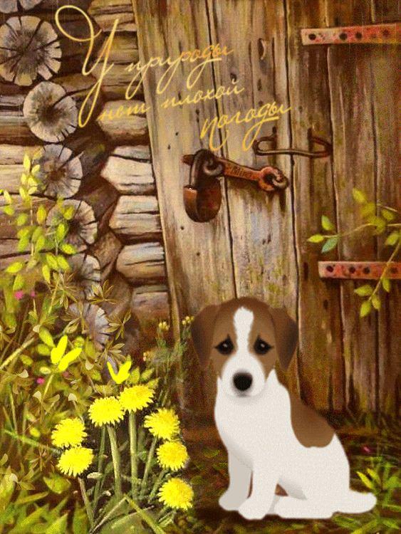 анимационные открытки собак диск делается