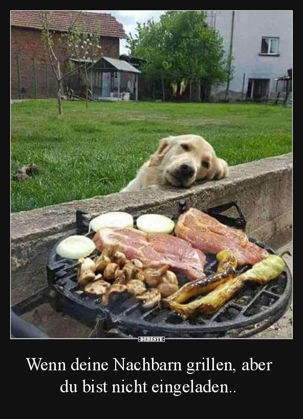 Wenn deine Nachbarn grillen, aber du bist nicht eingeladen.. | Lustige Bilder, Sprüche, Witze, echt lustig