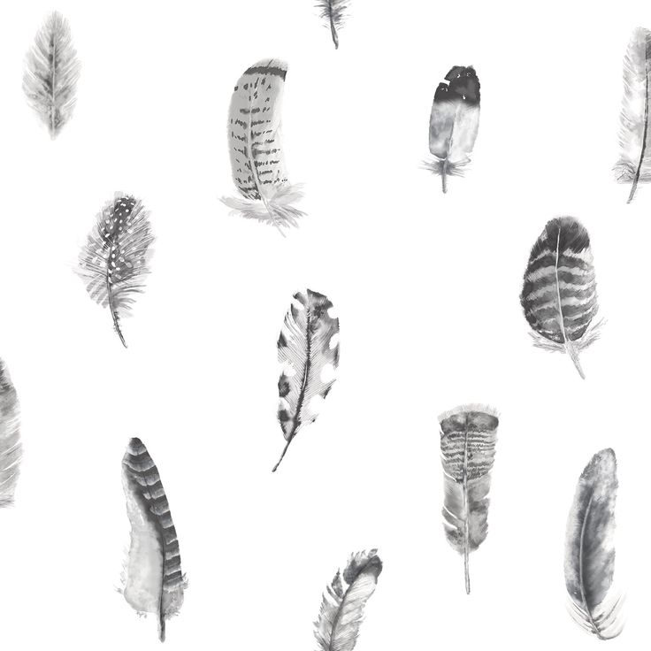 Black and White Feather Motif!