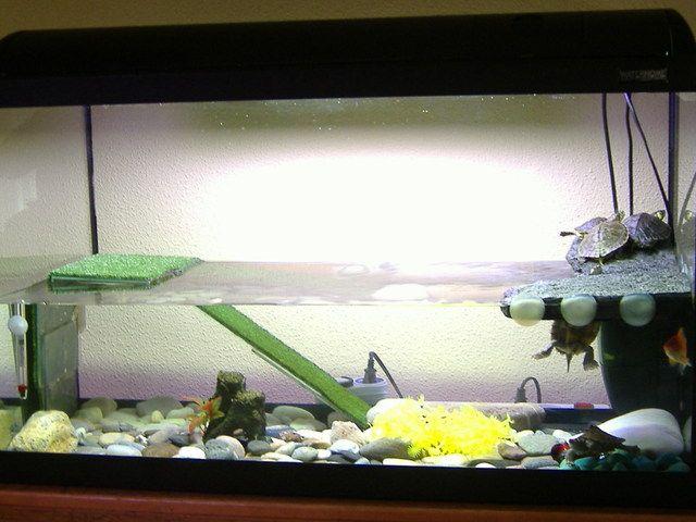 M s de 25 ideas incre bles sobre peceras para tortugas en - Peceras de diseno ...