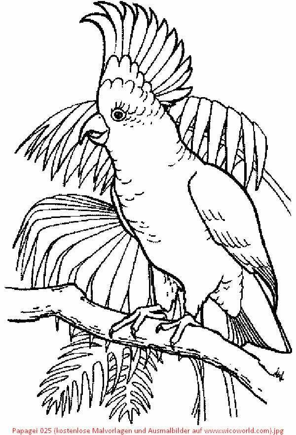 papagei 025 kostenlose malvorlagen und ausmalbilder auf