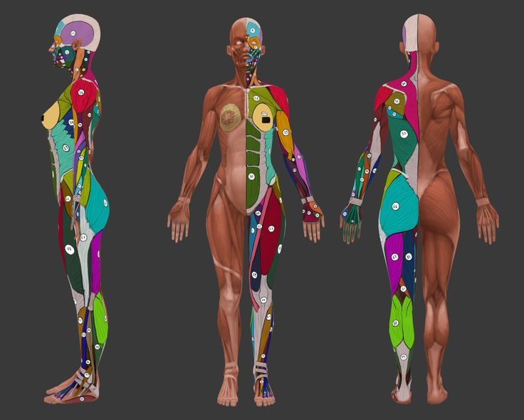 ArtStation - Female anatomy study , Dawid Krzyżanowski