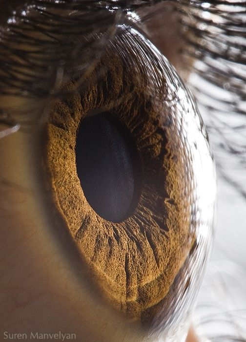 I LOVE eyes, and all their crazy textures and colors. These photos are amazing! Your Beautiful Eyes - Extreme close of eyes with all their relief. Source: Behance. Submitted By: Suren Manvelyan.: Extreme Close, Suren Manvelyan, Amazing Photography, Brown Eye, Eye Macros, Human Eye, Macros Photography, Close Up, Beautiful Eye
