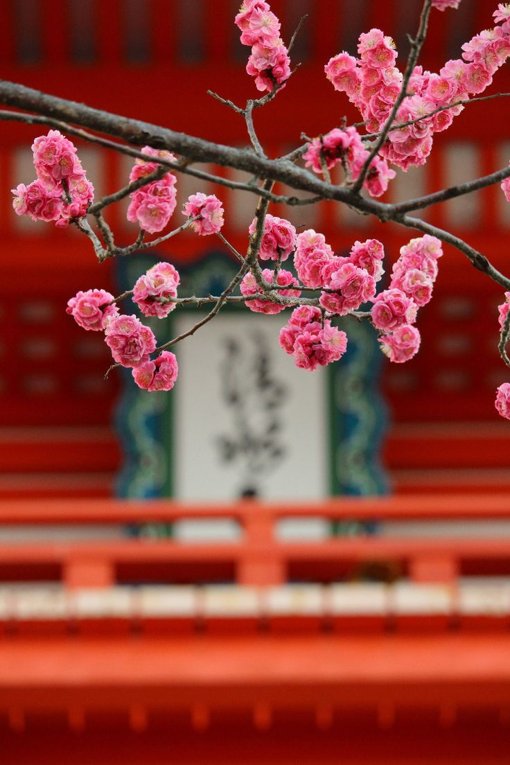 Awesome And Out Of The Ordinary Sakura Spots In Japan When To Go Cherry Blossom Japan Beautiful Flowers Images Flower Images