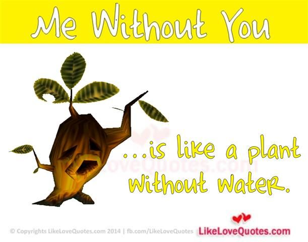 Me Without You is like a plant without water.