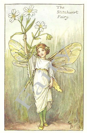 The Stitchwort Flower Fairy from 'Flower Fairies of the Spring' by Cicely Mary Barker - PRINT. $5.95, via Etsy.