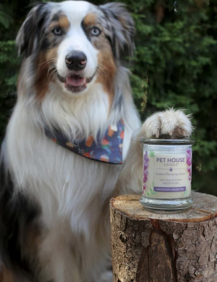 19 Of The Best Candles You Can Get On Amazon Animal House Pets Best Candles