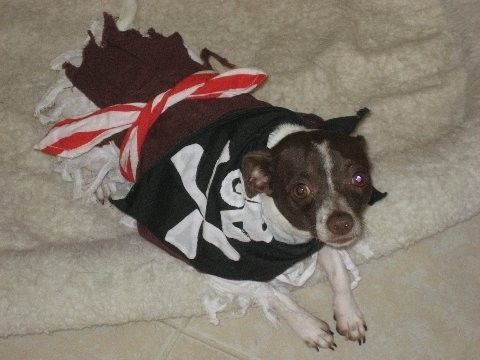 #Dog #Pirate #Costume Available for Custom Order Small up to 16 inches…