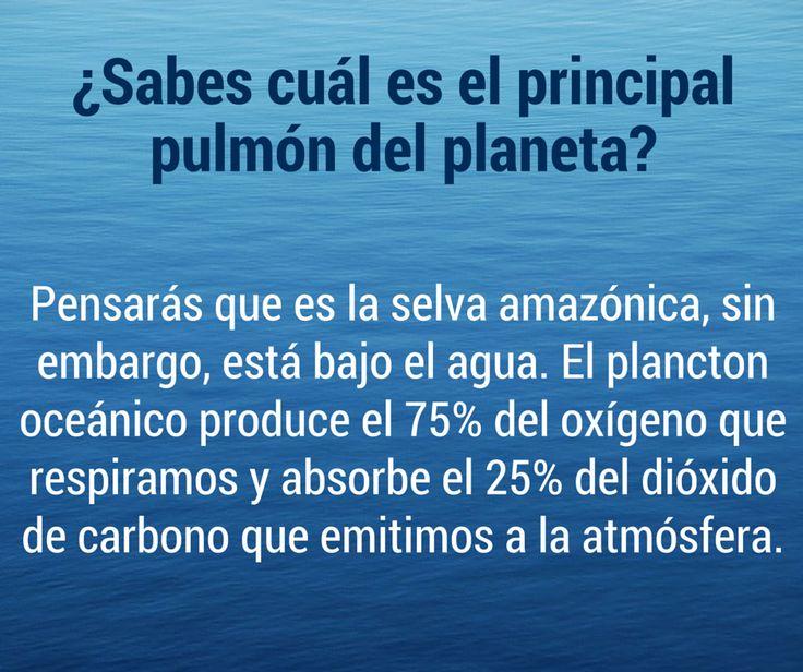 #DatoCurioso ¿Sabes cuál es el principal pulmón del #planeta?
