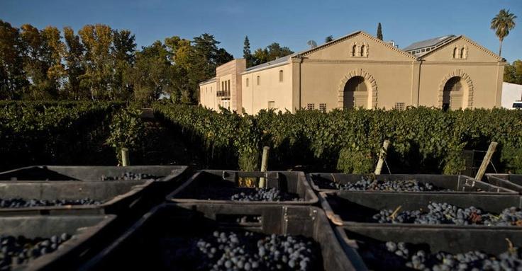 Casarena Winery