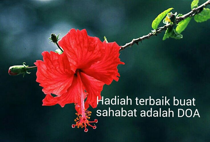 Hikmah..doakan sahabat