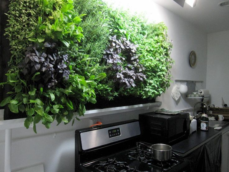 Massive kitchen wall herb garden growing herbs Indoor living wall herb garden