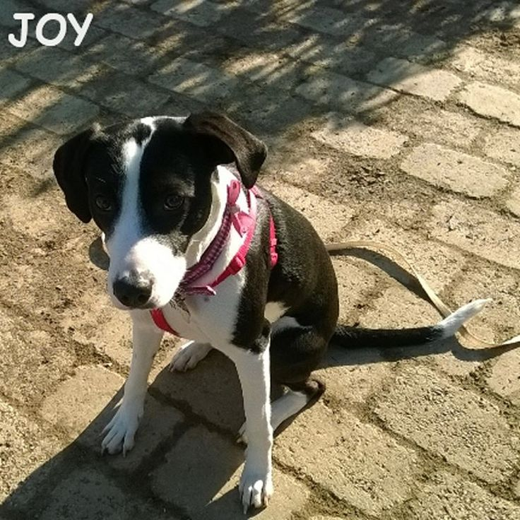 Finally the sun is here after the rainy days. 🐾🐾🐶 Follow JOY at her Facebook page for many more photos and videos:  https://www.facebook.com/JOYMixedBreedGirl/  #dog #instagramdogs #ilovemydog #instapuppy #dogfamily #doggie #ilovemypet #dogofinstagram #happydog #dogface #dogsofig #dogselfie #doglovers #dogsofinstaworld #petstagram #doglover  #petlover #instadog #dailypawwoof #happydog_feature #dogsubmit
