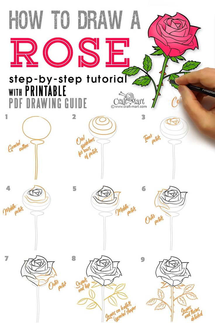 How to draw a rose stepbystep guide for beginners