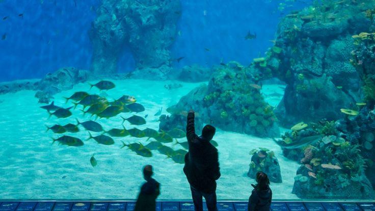 Nordeuropas største akvarium med tusindvis afdyr og syv mio. liter vand