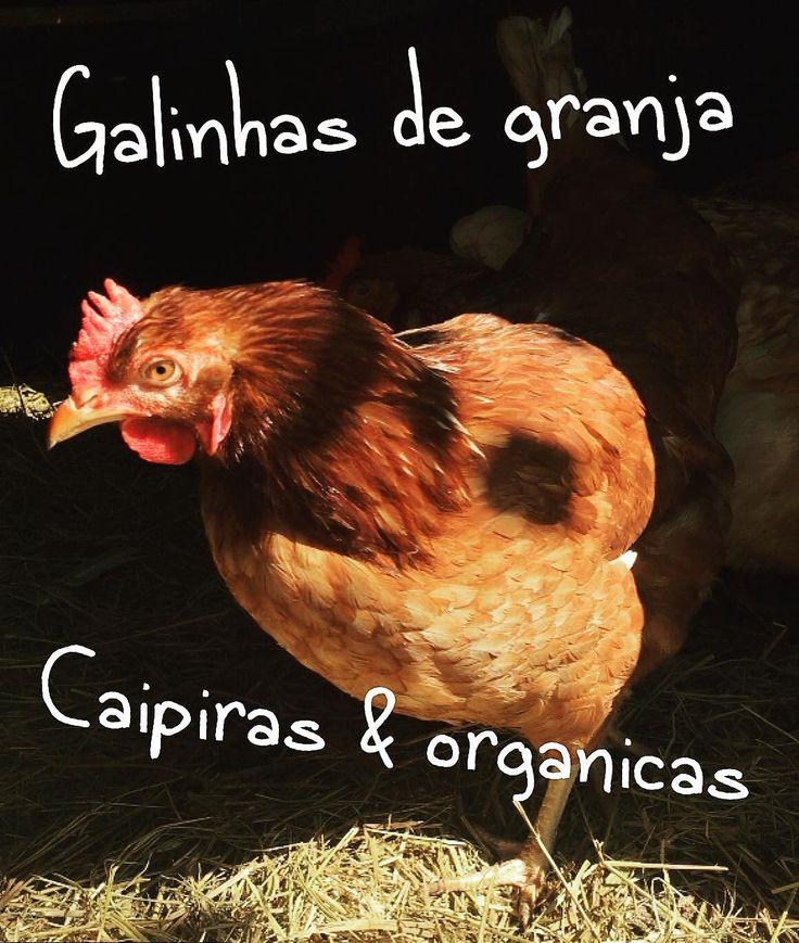"""LEIA  #Repost @liscereja with @repostapp  Vamos lá. Alguns pontos rápidos sobre penosas só pra resumir. Mais detalhes e comentários serão bem vindos. Começando com o mais trash e mais habitual.  Galinhas de granja ou """"convencionais"""": - galinhas de granja não são legais. É um nome bonitinho pra designar criação convencional. - Criação convencional de galinhas significa confinamento alimentação com ração de base de grãos transgênicos ( milho e soja ) e doses diárias de antibióticos """"promotores…"""
