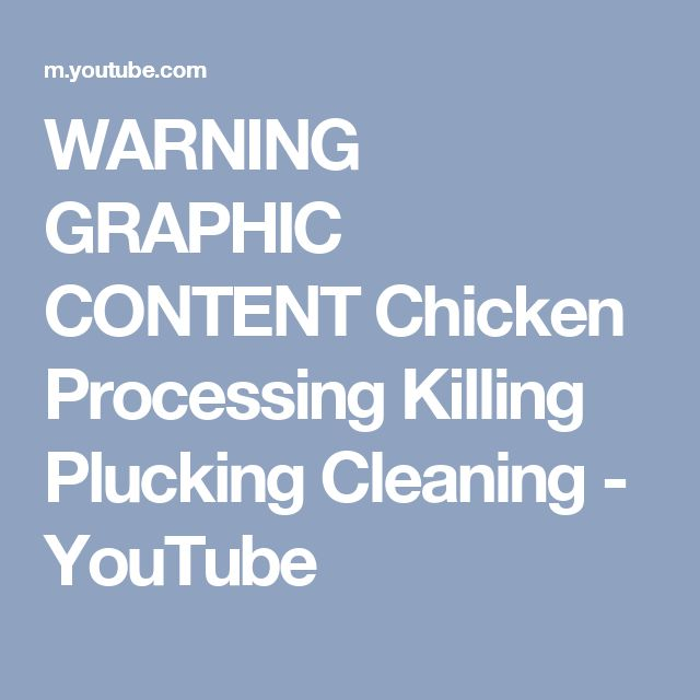 WARNING   GRAPHIC CONTENT Chicken Processing   Killing   Plucking   Cleaning - YouTube