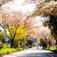 日光街道桜並木 写真・画像【フォートラベル】 宇都宮