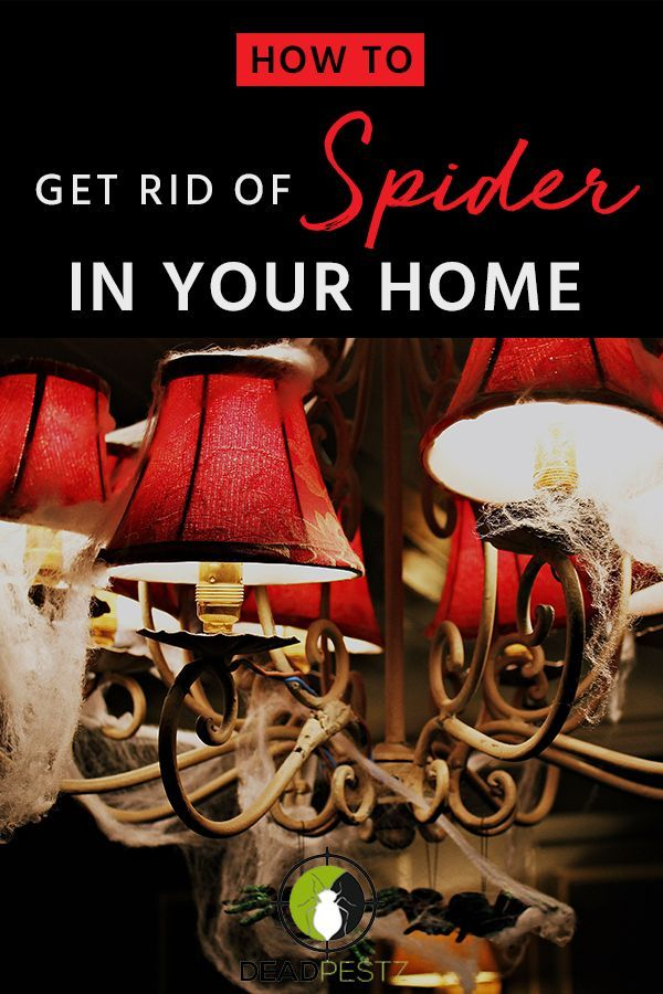How To Get Rid Of Spiders In Your House Basement Or Garage Dead Pestz Control Pests The Easy Way Get Rid Of Spiders House Spider Web Household Hacks